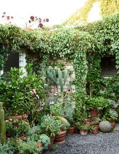 David Rosetzky and Sean Meilak - The Design Files Side Garden, Balcony Garden, Garden Pots, Garden Bed, Garden Landscape Design, Small Garden Design, Little Gardens, Small Gardens, Rustic Gardens