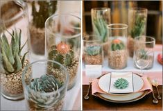 The round table centerpieces will be trios of cylinder vases filled with white rocks and varied types of succulents and cacti, surrounded by vertical birch logs tucked in between the cylinders.