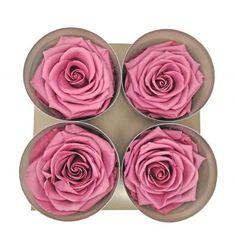 Cabeza de rosa preservada permium Lila. Es perfecta para decorar tus centros.  #lila #verdissimo #florpreservada #flor #preservada #rosas #floreterna