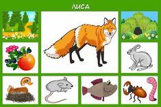 Про диких животных для детей + карточки кто где живет и чем питается | Новости для девушек