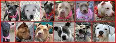 Help this shelter find furever homes for these precious furbabies.