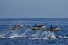 Image result for dolphin and whale