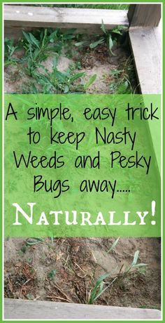 Who loves weeds??? I'll tell ya' who…. NOBODY!!!! Especially when they are in your sand box! This can be no fun at all, for you or your little ones. :( But don't fret!!! Wit…