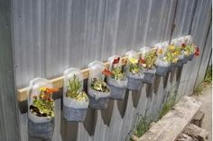 What a great little container garden made from old milk jugs - placed right at the little one's level!