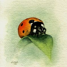 Watercolour Ladybug. Catherine, your ladybug pins are amazing. I've been collecting them since 1962, not just pictures. So much fun to see another ladybug fan.