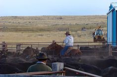 || To be the rancher's best advocates by marketing their cattle to the right people, at the right time with honest details. || https://www.facebook.com/KRoseCattleCompany/photos/a.1506341303014996.1073741830.1440536809595446/1506344356348024/?type=3&theater
