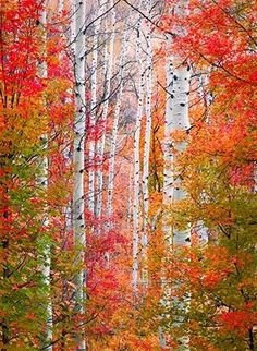 ♥ Autumn in the Wasatch Mountains, Utah.