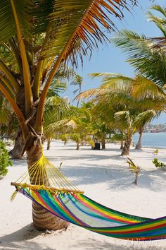 Hammock and an awesome beach in Belize.  Go to www.YourTravelVideos.com or just click on photo for home videos and much more on sites like this.