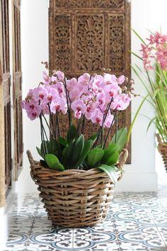 Orquídeas en cesto de mimbre
