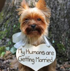 Puppy Sign - My Humans are Getting Married Rustic Wedding, Shabby Chic Wedding