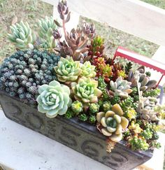 小さな庭の画像 by yucoさん | 小さな庭と多肉植物と多肉小屋と寄せ植えと多肉植物の寄せ植えアイデアコンテストと植中毒と成長記録