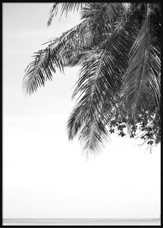 BW Tropical Seaview Tropical Posters, Abstract, Beach, Artwork, Summary, Work Of Art, The Beach, Auguste Rodin Artwork, Beaches