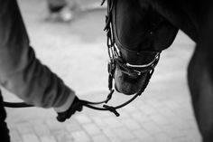 www.horsealot.com, the equestrian social network for riders & horse lovers | Equestrian Photography : Angeliki Hristoff.