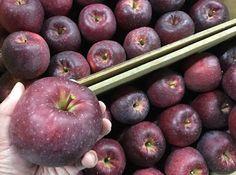 青果物の流通  ソーシャルメディアアグリ「地場活性化」のために: 蜜が入りやすいりんご