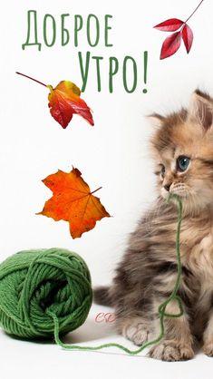 My Mood, Good Morning, Cats, Animals, Bonjour, Buen Dia, Gatos, Animales, Kitty Cats