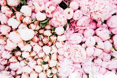 Design Inspiration: Peonies and Flower Markets