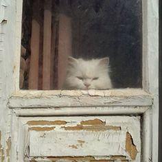 cat-in-windows:  via @adiragramsemog Instagram photo | Websta