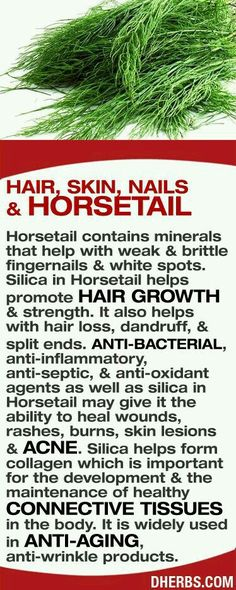 Never heard of horsetail . . . Will be looking it up!