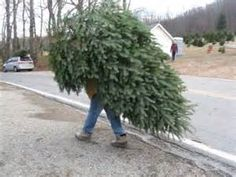 LOVE THE ADVETURE OF FINDING YOUR OWN SPECIAL FRESH CHRISTMAS TREE? Team Pendley has compiled a list of Christmas Tree Farms In Oregon to help you find that perfect tree! AMITY Alan McKee Farms 249...