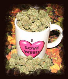 grow marijuana plant  http://www.mjseedscanada.com/growing/