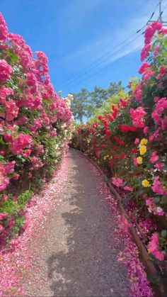 Most Beautiful Gardens, Beautiful Flowers Garden, Beautiful Gif, Beautiful Roses, Beautiful Places, Wonderful Places, Photo Background Images, Photo Backgrounds, Valley Of Flowers