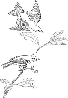 Scarlet Tanager Coloring Page From Category Select 20979 Printable