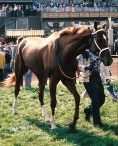 Secretariat, He walked like he owned the world... and he did <3