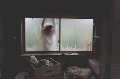 Photo by Priscilla Westra | Unsplash | Unsplash