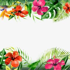 New flowers png tropical ideas Frame Floral, Flower Frame, Flower Art, Tropical Leaves, Tropical Flowers, Summer Flowers, Flowers Nature, Wild Flowers, Flower Crown Drawing