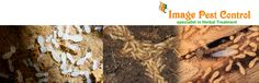 Anti Termite Control and Anti Termites Treatment in Bangalore – www.antitermitecontrolbangalore.com