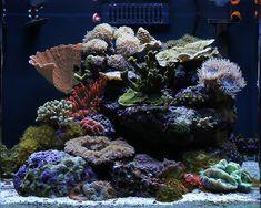 urbaneks - 2010 Featured Nano Reefs - Featured Aquariums - Monthly Featured Nano Reef Aquarium Profiles - Nano-Reef.com Forums #aquarium