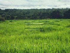 Nossa saudosíssima ex fazenda em Gurupi - TO