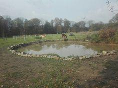Přírodní rybník