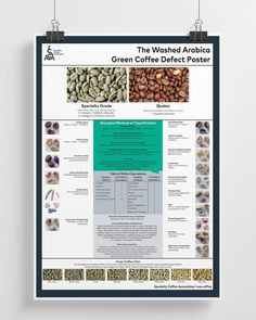 Green Arabica Coffee Classification System Poster (Print)