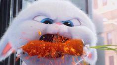 The Secret Life of Pets - Snowball Trailer Cute Bunny Cartoon, Cute Cartoon Drawings, Cartoon Girl Drawing, Cartoon Pics, Cute Cartoon Wallpapers, Snowball Rabbit, Pet Trailer, Rabbit Wallpaper, Pets Movie