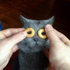 TOP 35 Cats and Kittens Pictures | Funny Animals, Funny Cat | DomPict.com