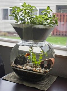 The Goldfish Garden aquaponic aquarium