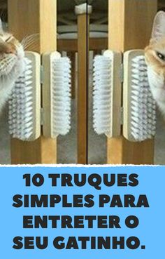 If your cat is bored, you really need to check out these 10 tricks - Cat stuff - Katzen Diy Jouet Pour Chat, Diy Cat Tower, Cat Entertainment, Cat House Diy, Cat Hacks, Cat Shelves, Cat Playground, Cat Enclosure, Cat Condo