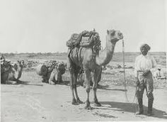 Image result for australian expedition