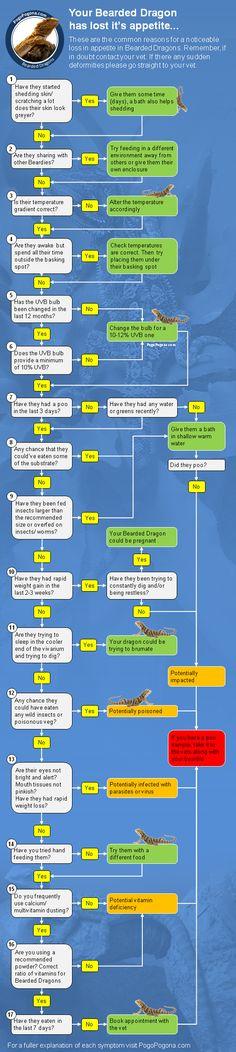 Bearded Dragon loss of appetite flow chart