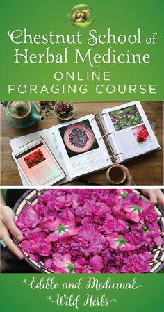 Our Online Foraging Course begins this holiday season!!