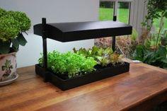 Grow Light Kitchen Herb Garden