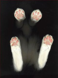 omg kitties paws are like my favorite part of them!