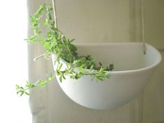 Like the rustic style of these hanging pots. White but they feel organic.