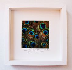Artframe with real birdfeathers : Topquality by Alanscollectibles