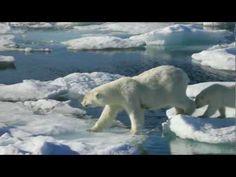 Greg MacGillivray and Meryl Streep talk about the Arctic Polar Bears in IMAX 3D