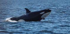 AnotherHooverBeauty. @Lara Elliott Whale Watch.