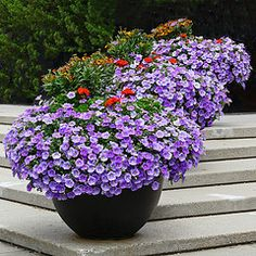 Beautiful planters