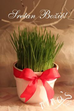 "In Croatia it's customary to plant wheat 2 weeks before Christmas so it's nice and green for the Christmas Day.  p.s. ""Sretan Božić"" means Merry Christmas in Croatian ;)"