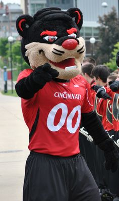 Cincinnati Bearcat - great mascot...just great
